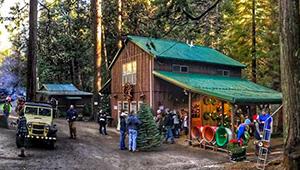 Little Bear Tree Farm